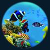 Sca fish